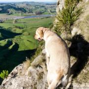 Dog Control Te Mata Park
