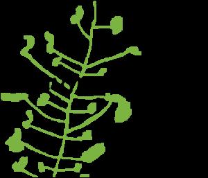 Enviroschools Logo